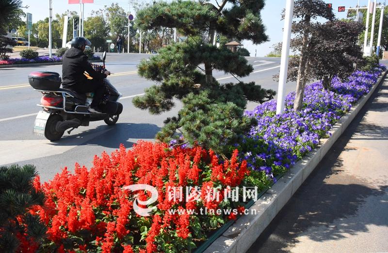 绿化提升 城市景美